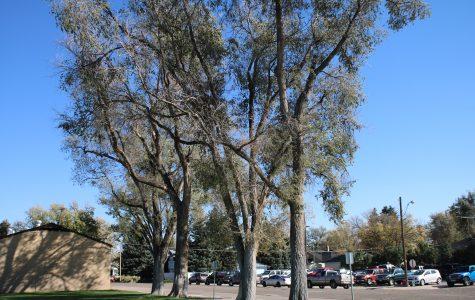 Wind wreaks havoc on Eaton