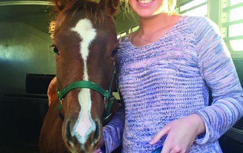 Sparkly shirts and shiny horses