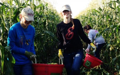 Key Club cleans up Fritzler's corn maze for the Weld County Food Bank