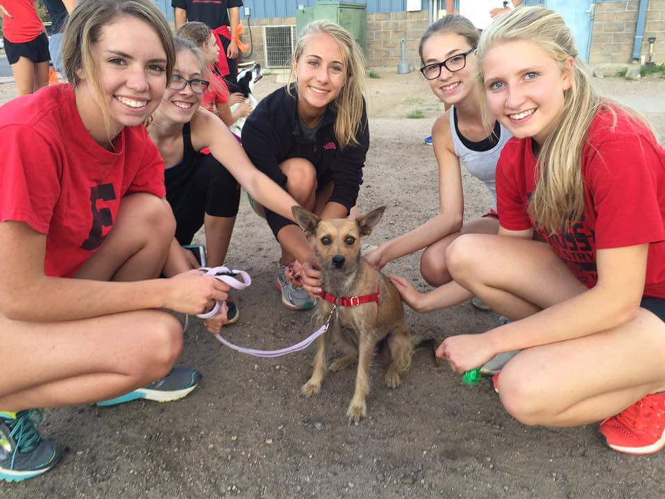 Cross country dashing with K-9's