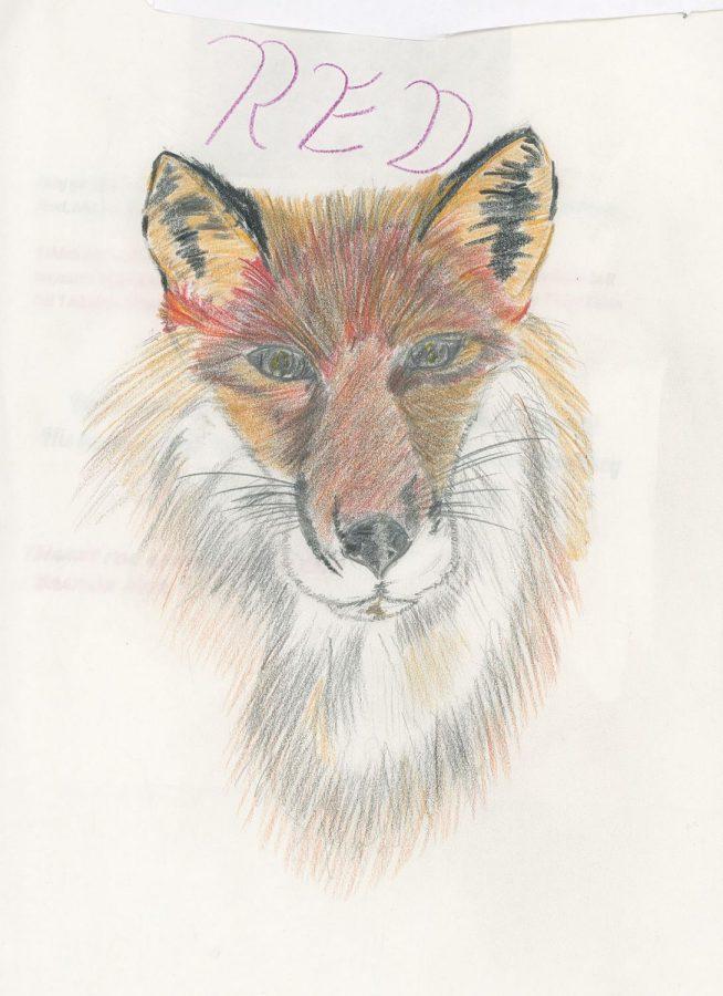Fox+Concept